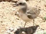 ਵਾਇਰਲ ਵਿਡੀਓ: ਇੱਕ ਚਿੜੀ–ਮਾਂ ਨੇ ਟਰੈਕਟਰ ਤੋਂ ਕਿਵੇਂ ਬਚਾਏ ਆਪਣੇ ਆਂਡੇ…