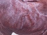 ਬੱਕਰੇ ਦੀ ਕੀਮਤ 2 ਲੱਖ ਰੁਪਏ