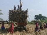 ਭਾਰਤ 'ਚ ਇੱਥੇ ਔਰਤਾਂ ਨੂੰ ਕਢਾਉਣੀ ਪੈਂਦੀ ਹੈ ਬੱਚੇਦਾਨੀ, ਜਾਣੋ ਕਿਉਂ…