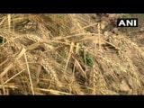 ਪੰਜਾਬ 'ਚ ਕੁਝ ਥਾਵਾਂ 'ਤੇ ਮੀਂਹ, ਝੱਖੜ ਤੇ ਗੜੇਮਾਰ ਨੇ ਫ਼ਸਲਾਂ ਦਾ ਕੀਤਾ ਨੁਕਸਾਨ