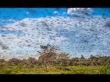 ਫ਼ਸਲਾਂ ਬਚਾਉਣ ਲਈ ਟਿੱਡੀ ਦਲਾਂ ਦਾ ਖ਼ਾਤਮਾ ਕਰਨ ਵਿੱਚ ਈਰਾਨ ਦੀ ਮਦਦ ਕਰੇਗਾ ਭਾਰਤ